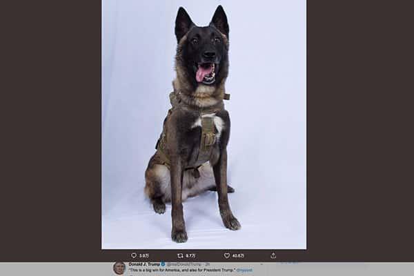 トランプ大統領が讃えた「英雄犬」名前が明かされなかった理由は