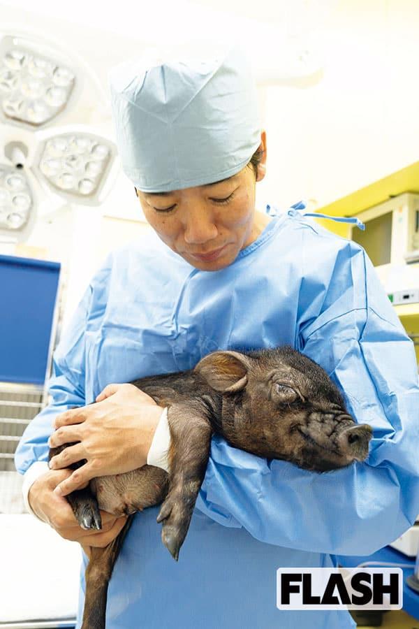 調布 病院 田園 動物