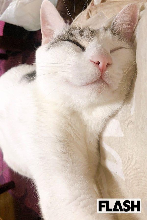 BIGMAMA・東出真緒の愛猫はサバ白とキジ白の保護ねこ