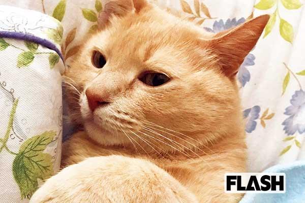 オードリー若林にそっくり…村上りいなの愛猫は内弁慶
