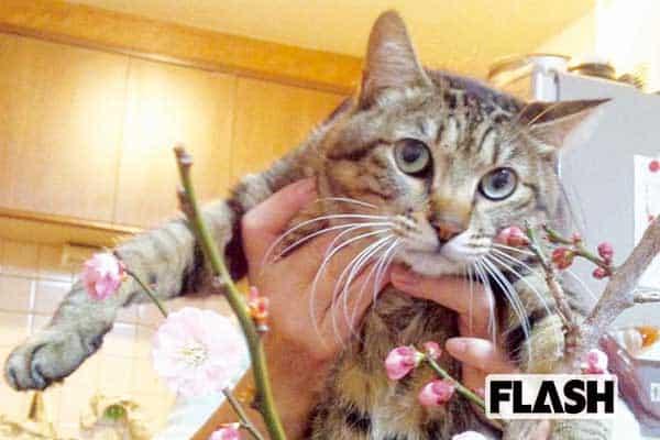渡辺哲、愛猫は自分以外になつかない「優越感に浸ってる(笑)」