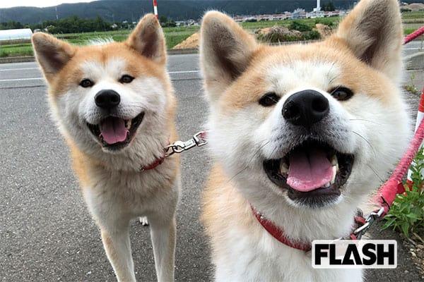 秋田犬「ゴン」と「トラ」が振り返る2019年/芸能スポーツ編