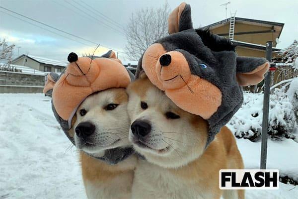 秋田犬「ゴン」と「トラ」が予想する「明るく楽しい2020年」