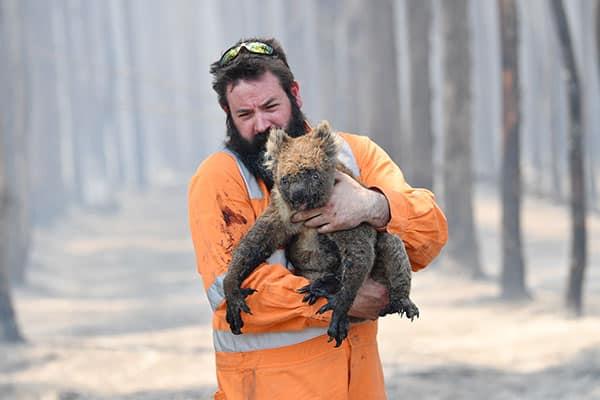 オーストラリアの山火事で動物5億匹が焼死…コアラは絶滅危惧も