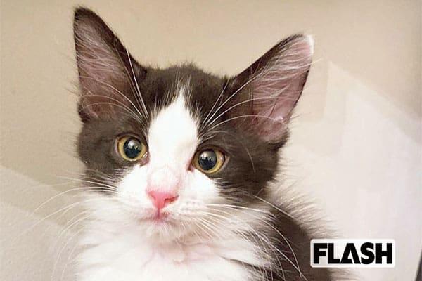 ひなんちゅ、甘えん坊な愛猫は「自分から湯船に入ってくる」