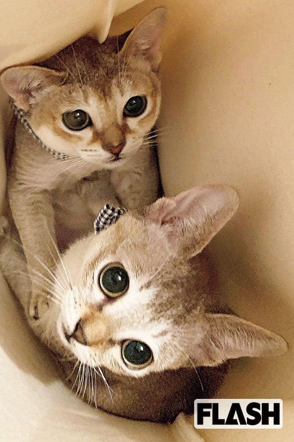 貴島明日香「初めて一緒にベッドで」愛猫2匹が打ち解けて感激