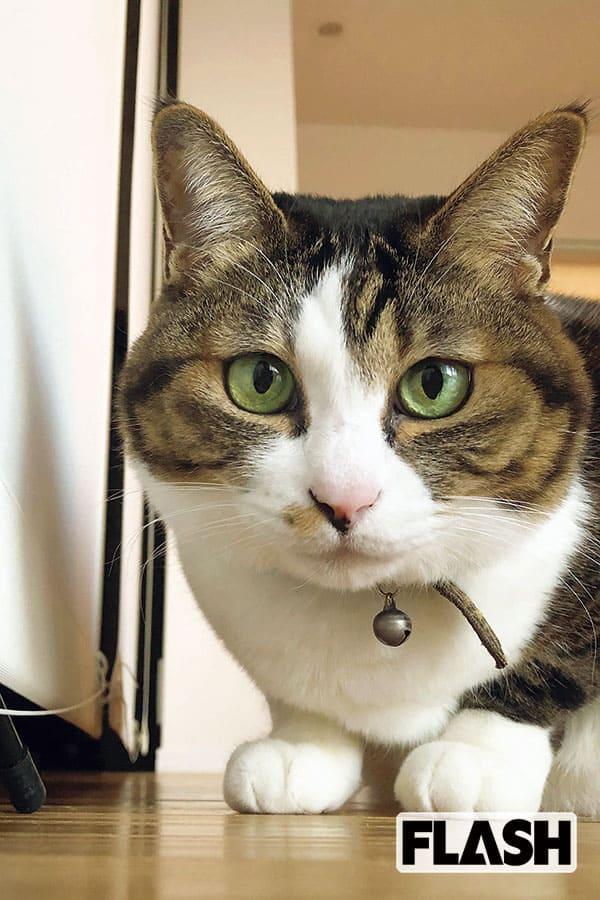 愛猫は甘えん坊「上大迫祐希」家族がいないと食欲もなし