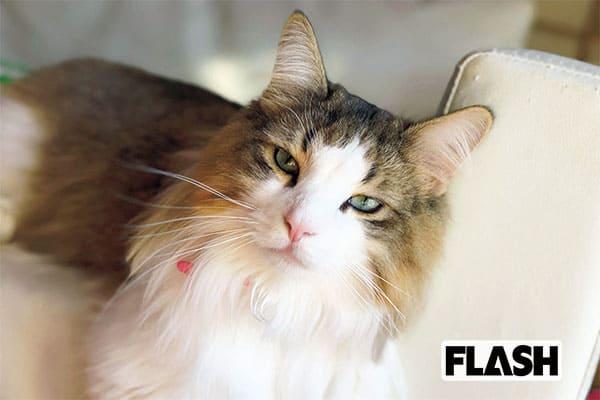 加藤優、実家に預けた愛猫に「布団の上でおしっこする癖が…」