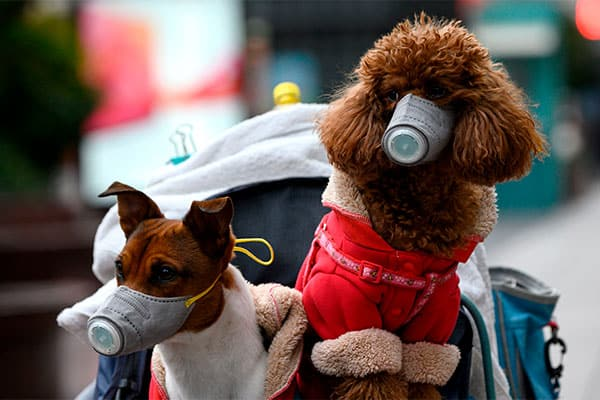 香港で犬から新型コロナウイルス検出、獣医師の反応は?
