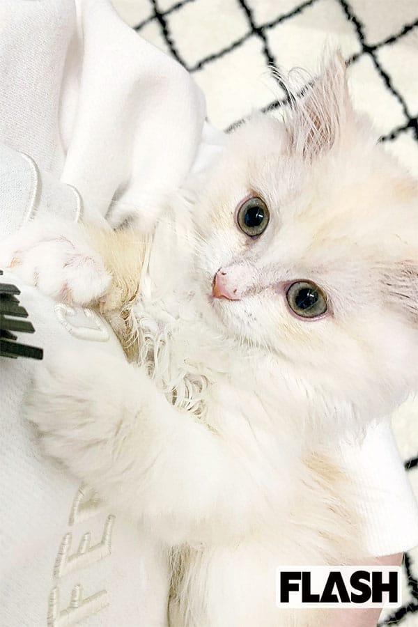 田中れいな、愛猫のカメラサービスに「芸能人向き(笑)」