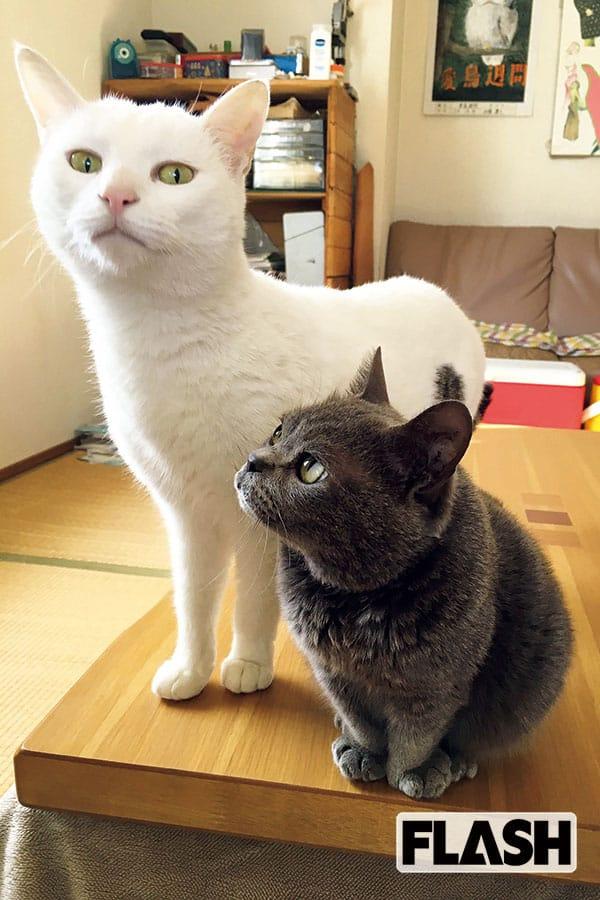 加藤ナナ、食いしん坊の愛猫が心配「ねことは思えない体型で…」