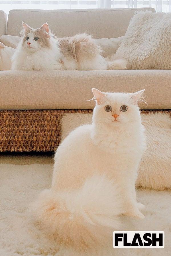 野崎萌香、愛猫が爪切り中に大暴れ「家族総出でやる(笑)」
