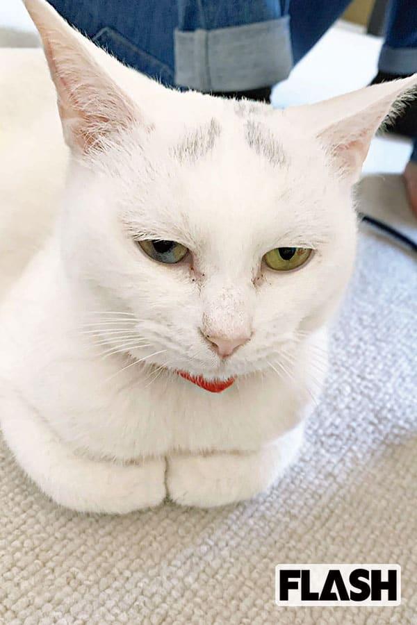 OBP研究生・神南里奈、愛猫は「家族が寝たあと家をパトロール」