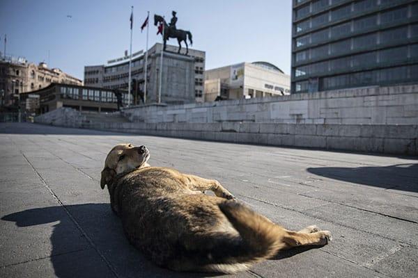 アメリカの観光地でネズミ大移動…コロナが動物に与える影響は