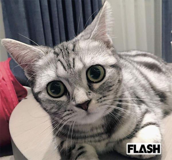 竹内愛紗、愛猫は0歳で超やんちゃ「1日でおもちゃを壊しちゃう」