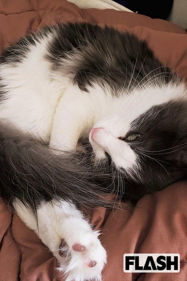 上石菜月、愛猫の朝ごはん二度食い作戦に「騙せると思ってる?」