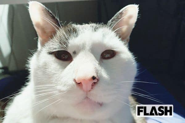 和田ラヂヲ、愛猫は顔がオッサン?「よくいえば哲学者顔」