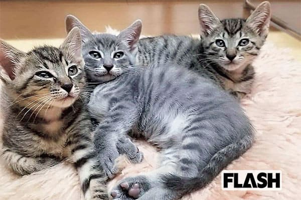 林家たい平、愛猫2匹の見分けがつかず「家族に笑われてた(笑)」