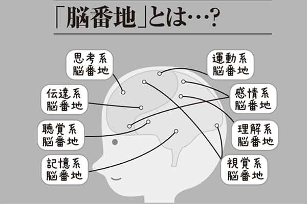 能力値を上げる「大人の脳ドリルvol.2」モテる脳に鍛え上げろ