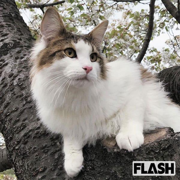 朝比パメラ、愛猫はお風呂好き「ねこじゃないのかも(笑)」