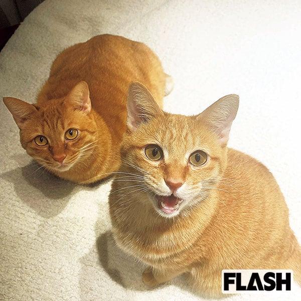 林ゆめ、2匹の愛猫は「かわいすぎて富良野の実家から連れ帰った」
