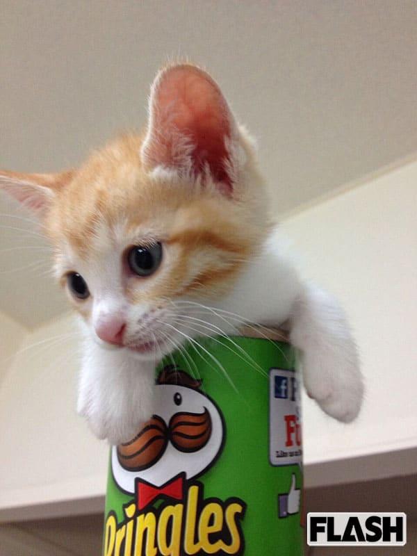 ハライチ岩井、愛猫の媚びない態度に「しがらみ多きは人間のみ」