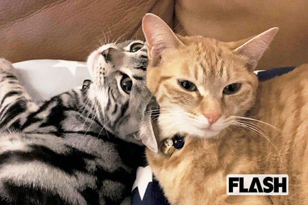 愛猫7匹と暮らす佐藤七海、「トトロ似」ねこにひと目惚れ!