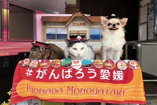 あつまれ!「どうぶつの駅長さん」トラ&カンナ&マロン/伊予上灘駅(愛媛)