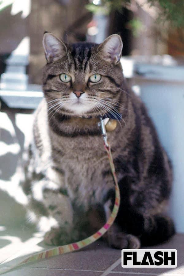 三遊亭小遊三、『笑点』にも出た愛猫は「私をほとんど無視」