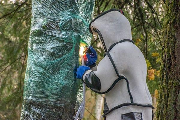 全米初の「スズメバチの巣」根絶作戦…SNSでは防護服に注目集まる