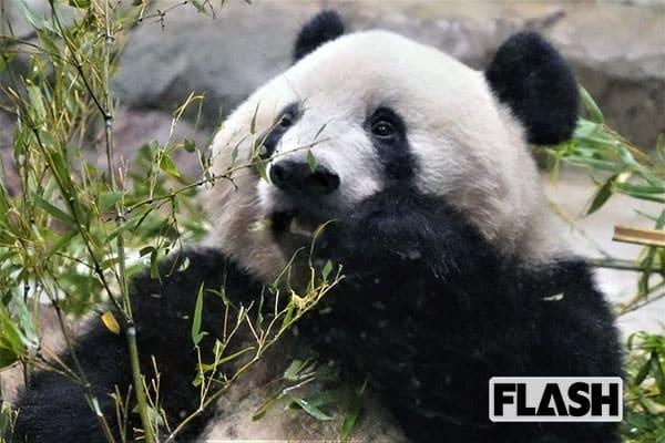 女子アナ横井弘海の「エンタメ時間」パンダの香香に会えるかな