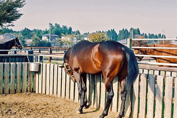 九冠馬・アーモンドアイは1口6万円が190万円…夢の一獲千金「一口馬主」の世界