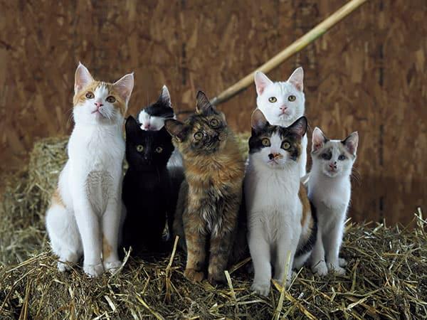 『世界ネコ歩き』岩合光昭監督が撮った「ネコの家族愛」北海道の牧場編