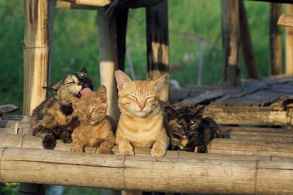 『世界ネコ歩き』岩合光昭監督が撮った「ネコの家族愛」ミャンマーの湖上編