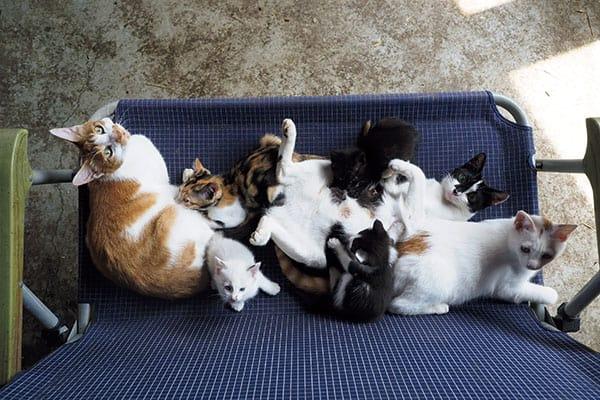 『世界ネコ歩き』岩合光昭監督が語る「ネコの社会論」室内飼いは不幸?