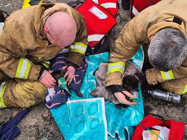 火事にあった猫が「ペット用酸素マスク」で救助される…SNSでは「君たちこそヒーローだ!」