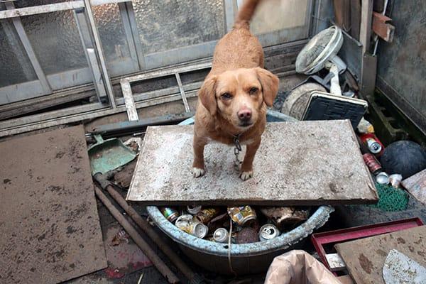 イギリスでペット泥棒が急増…犯人の手口は「ニセ動物査察官」