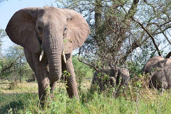 わが子と記念写真を…ゾウの檻に侵入した父親、娘への虐待で逮捕される