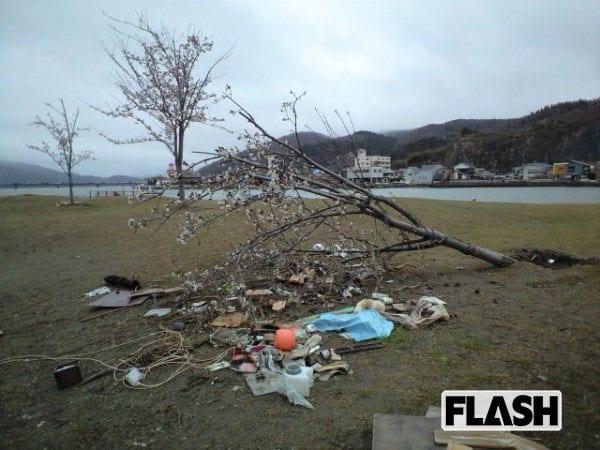 陸前高田に咲く1800本の桜……「ここまで津波が来た」ことを忘れぬように