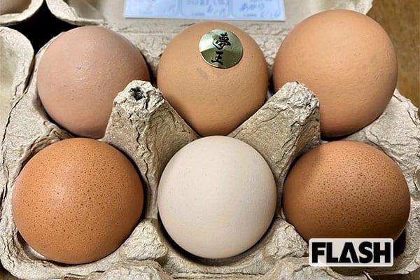 女子アナ横井弘海の『エンタメ時間』極上の卵を買ってプチ贅沢