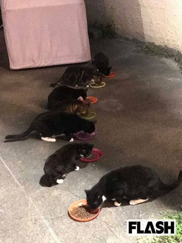 小池百合子都政が「地域猫」いじめ…東京五輪会場で「エサも水やりも認めない」